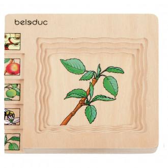Beleduc Puzzle 5 couches - Pomme 17039